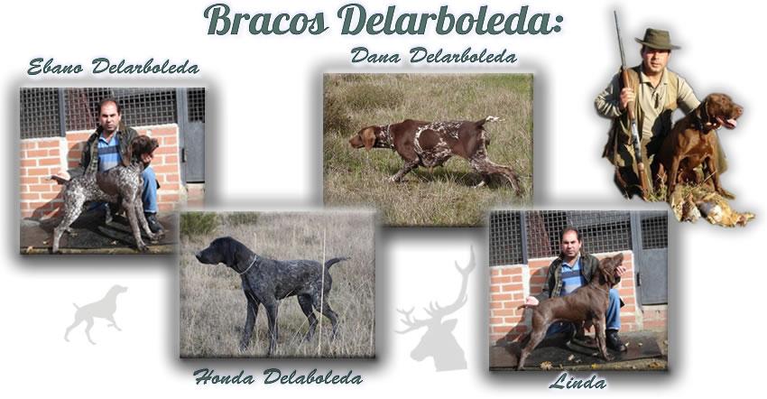 bracos_web3